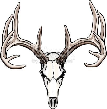 409x419 Deer Skull