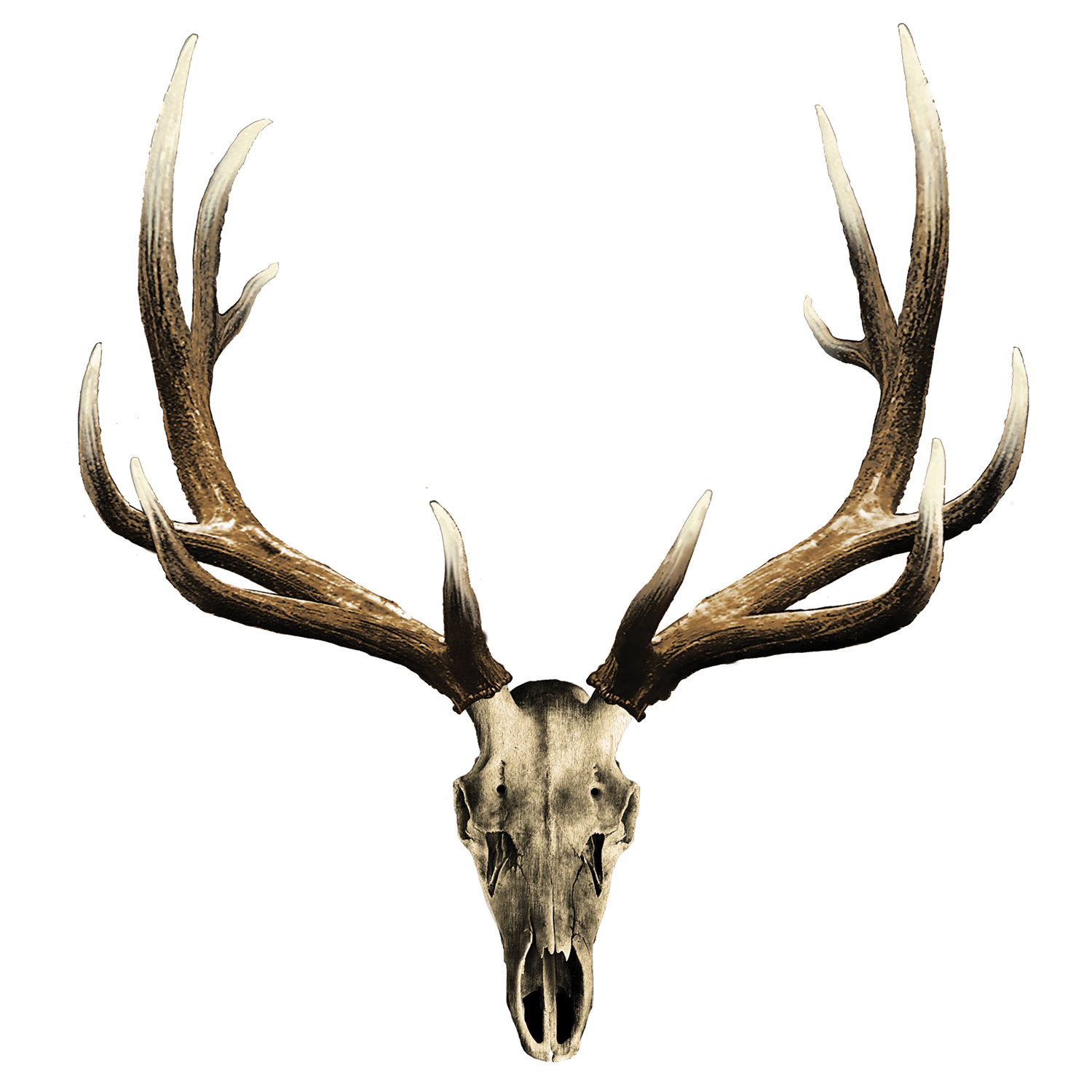 1500x1500 Elk Skull Decal Mossy Oak Graphics