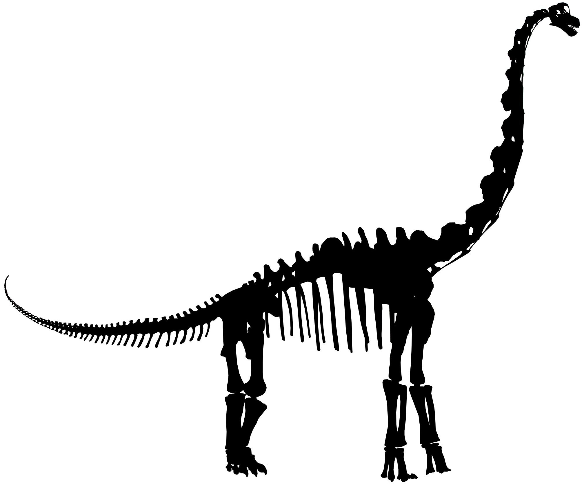2008x1673 Skeleton Clipart Velociraptor