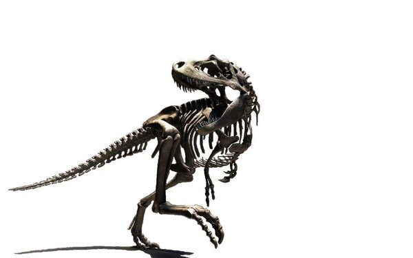 600x375 T Rex Skeleton Clipart