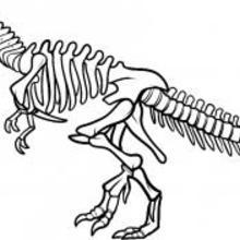 220x220 Comment Dessiner Un Squelette De Dinosaure, Dinosaur Skeleton