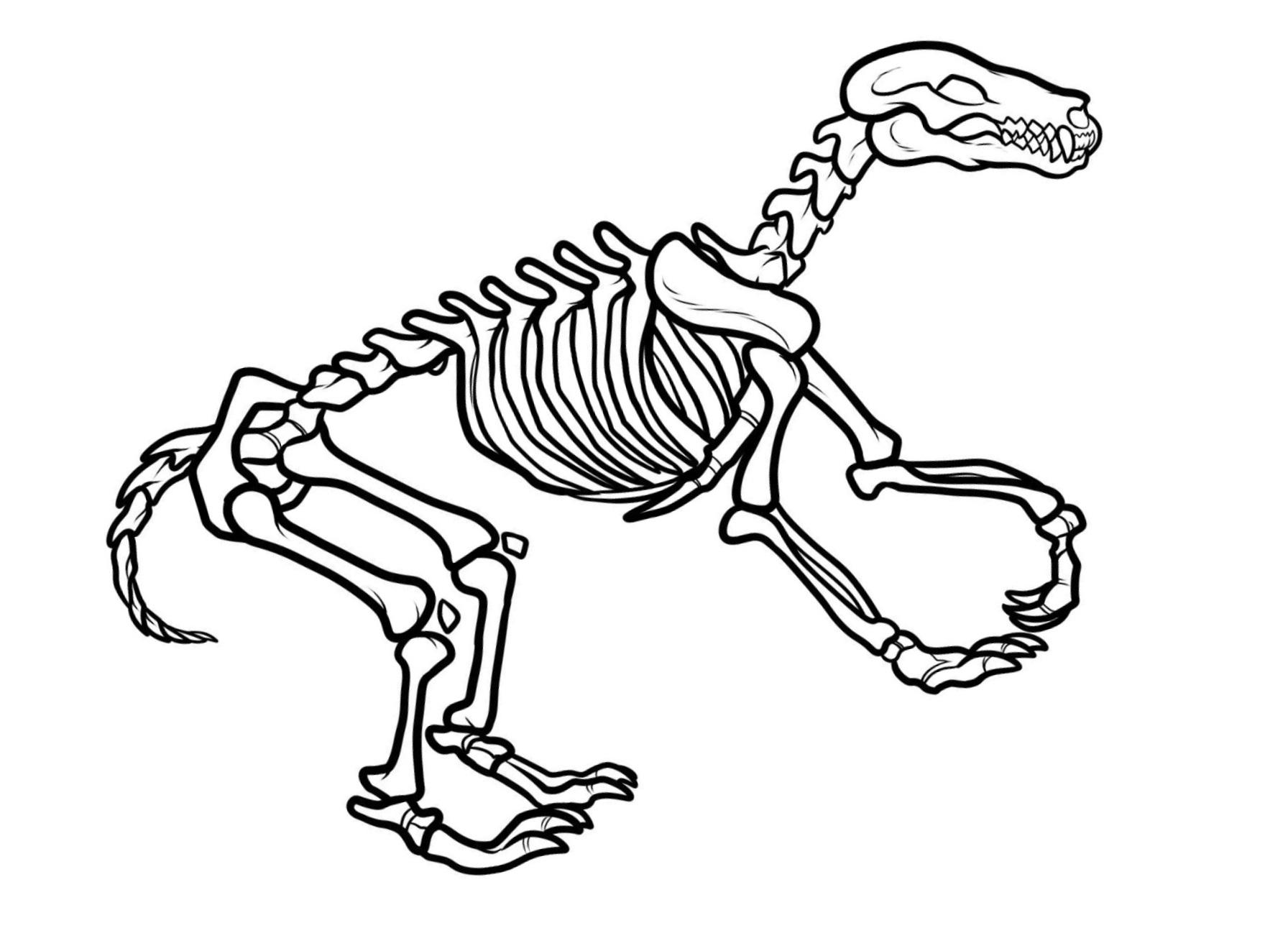 Dinosaur bones template free download best dinosaur for Printable dinosaur skeleton template