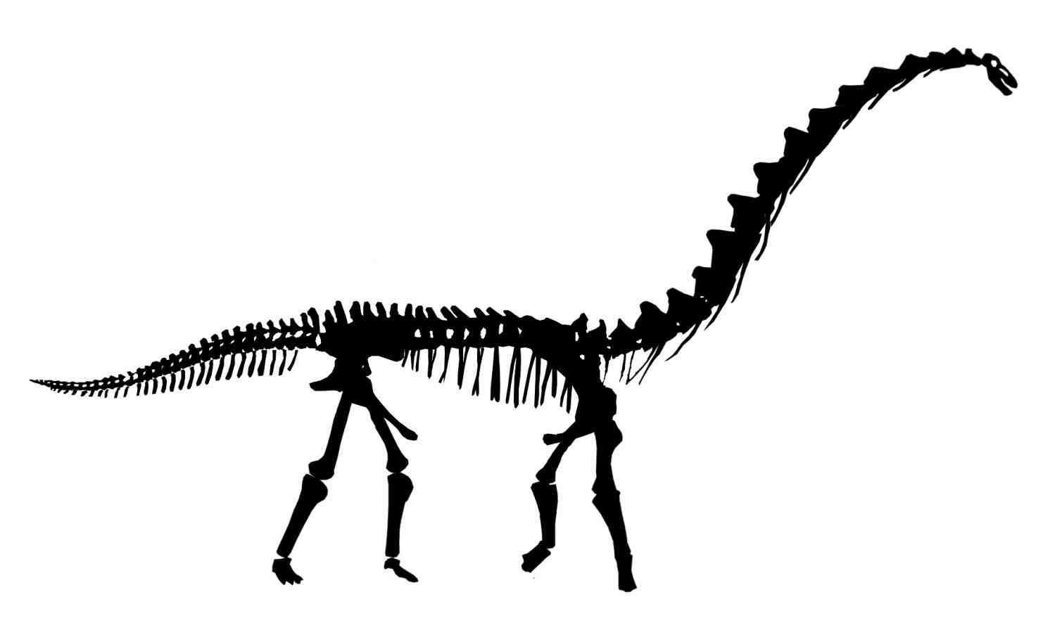 1509x896 drawings of dinosaur fossils