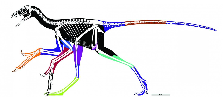 1500x655 Flesh Out Dino Bird Profile