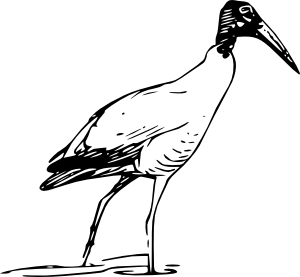 300x277 Ibis Bird Walking In Lake Clip Art