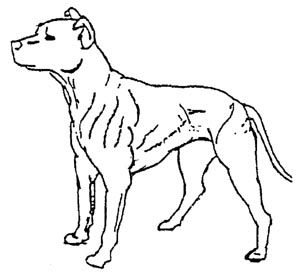 300x276 Best Dog Outline Ideas Dog Template, Templates