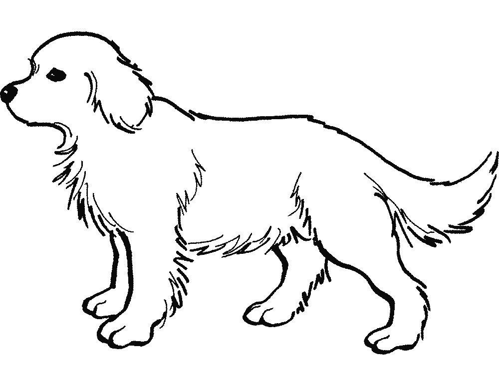 Free Colouring Pages Dog And Cat