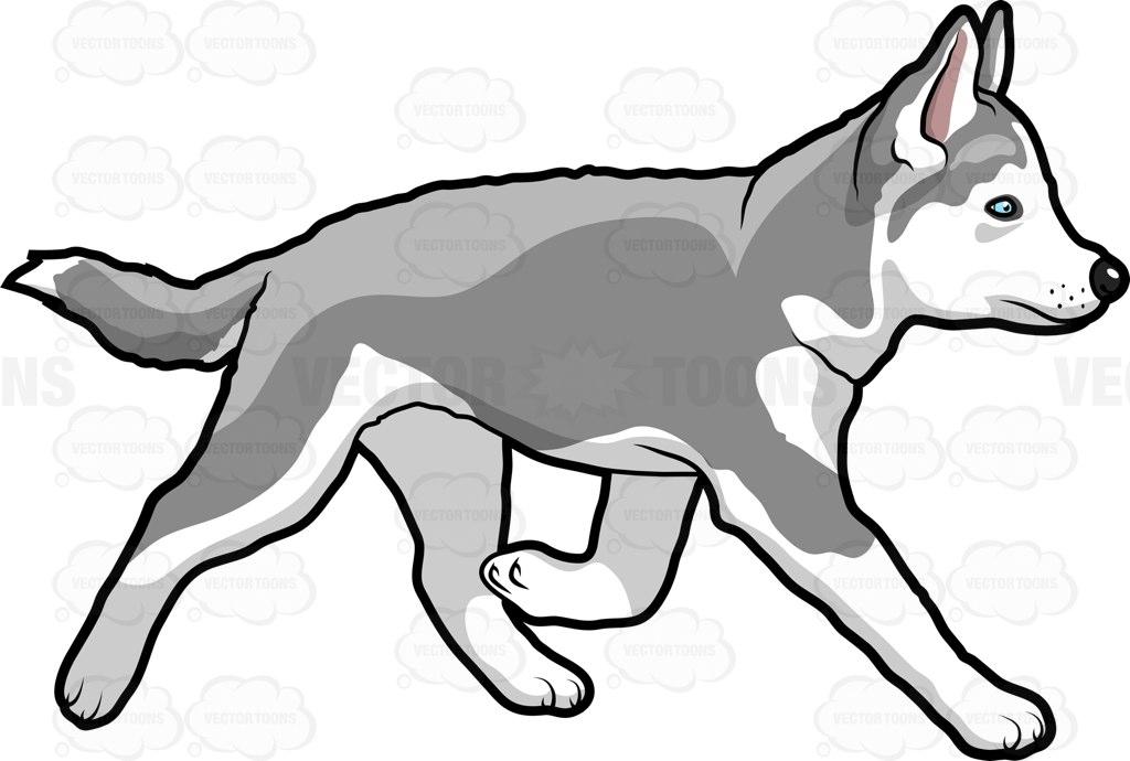 1024x690 Siberian Husky Dog Clipart, Explore Pictures