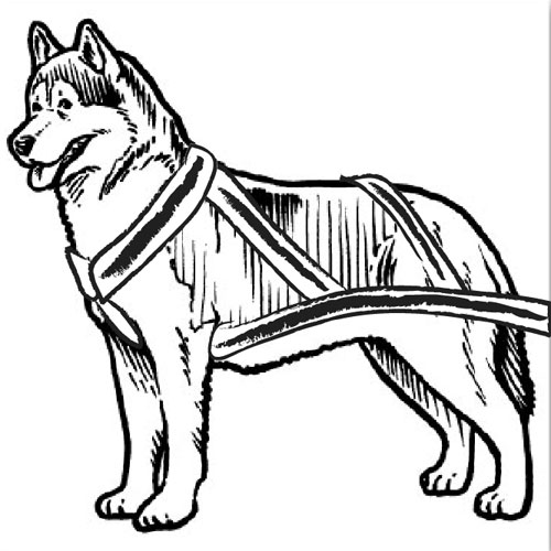 500x500 Sled Dog Clipart Husky Dog Clipart Clip Art Library Coloring Page