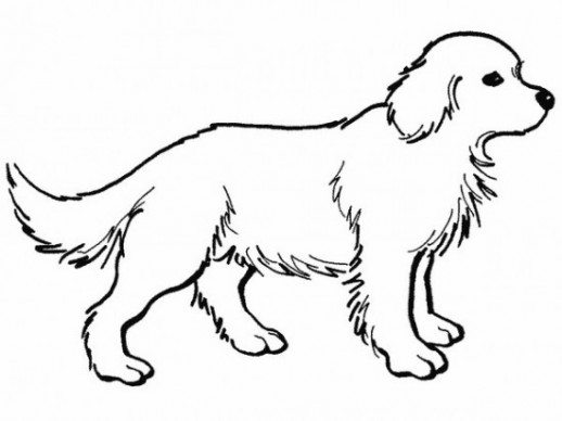 518x388 Dog Coloring Sheets Dalmatian Fire Dog Coloring Pages. Dog