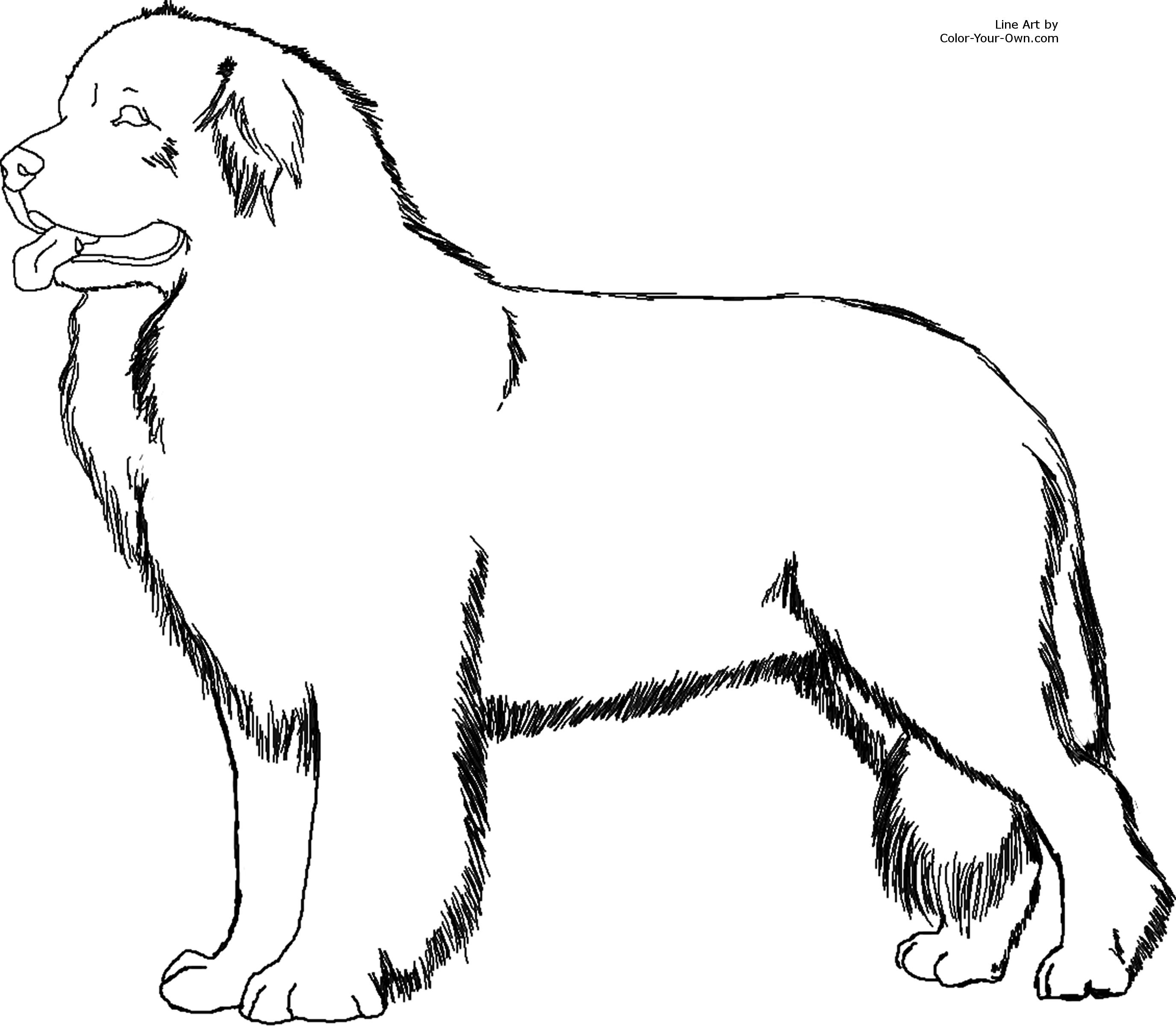 2751x2400 Newfoundland Dog Coloring Page
