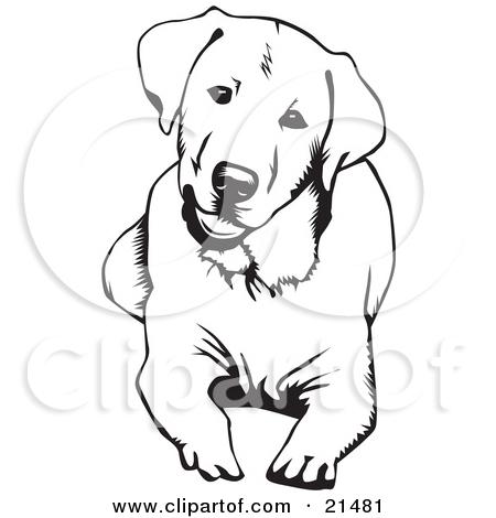 450x470 Black Lab Dog Clipart