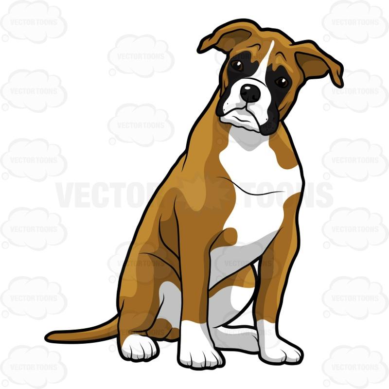 800x800 Boxer Dog Clipart