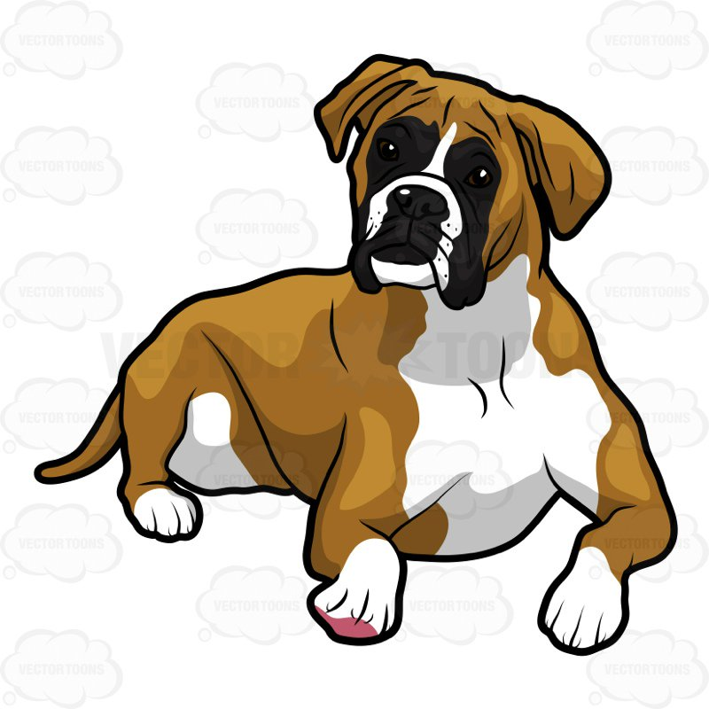 800x800 Boxer Dog Lying Down And Looking Up And To Its Right Cartoon