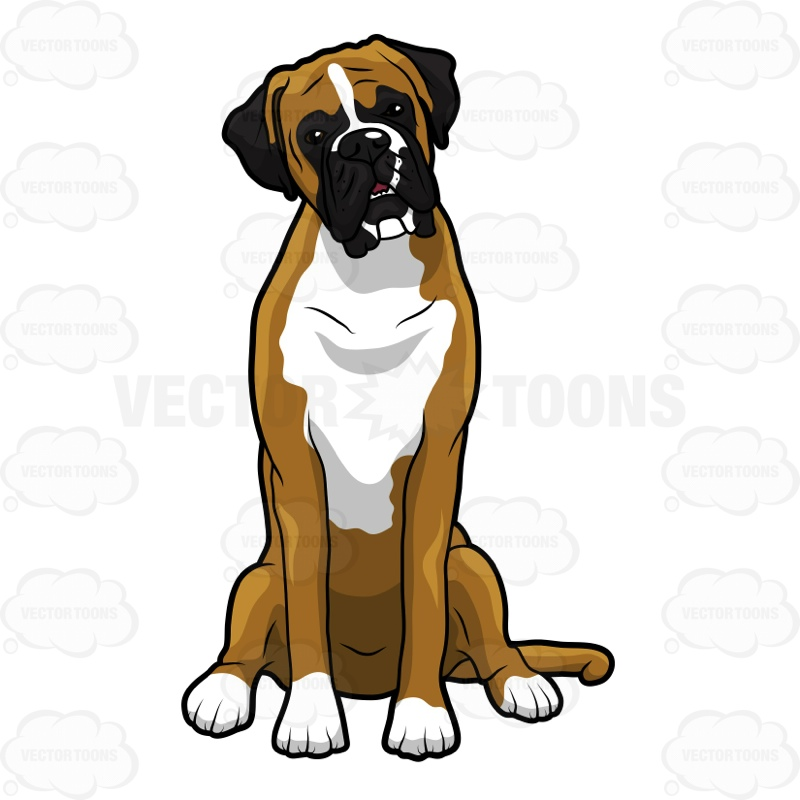 800x800 Brown Clipart Boxer Dog