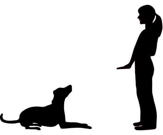 550x458 Essential Hand Signals For Dogs Popsugar Pets