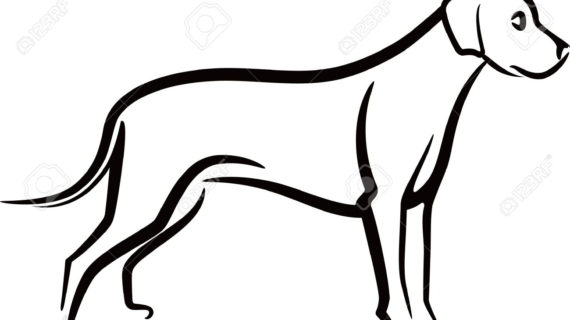 570x320 Outline Drawing Of A Dog Dog Outline Face Drawing Free Clipart