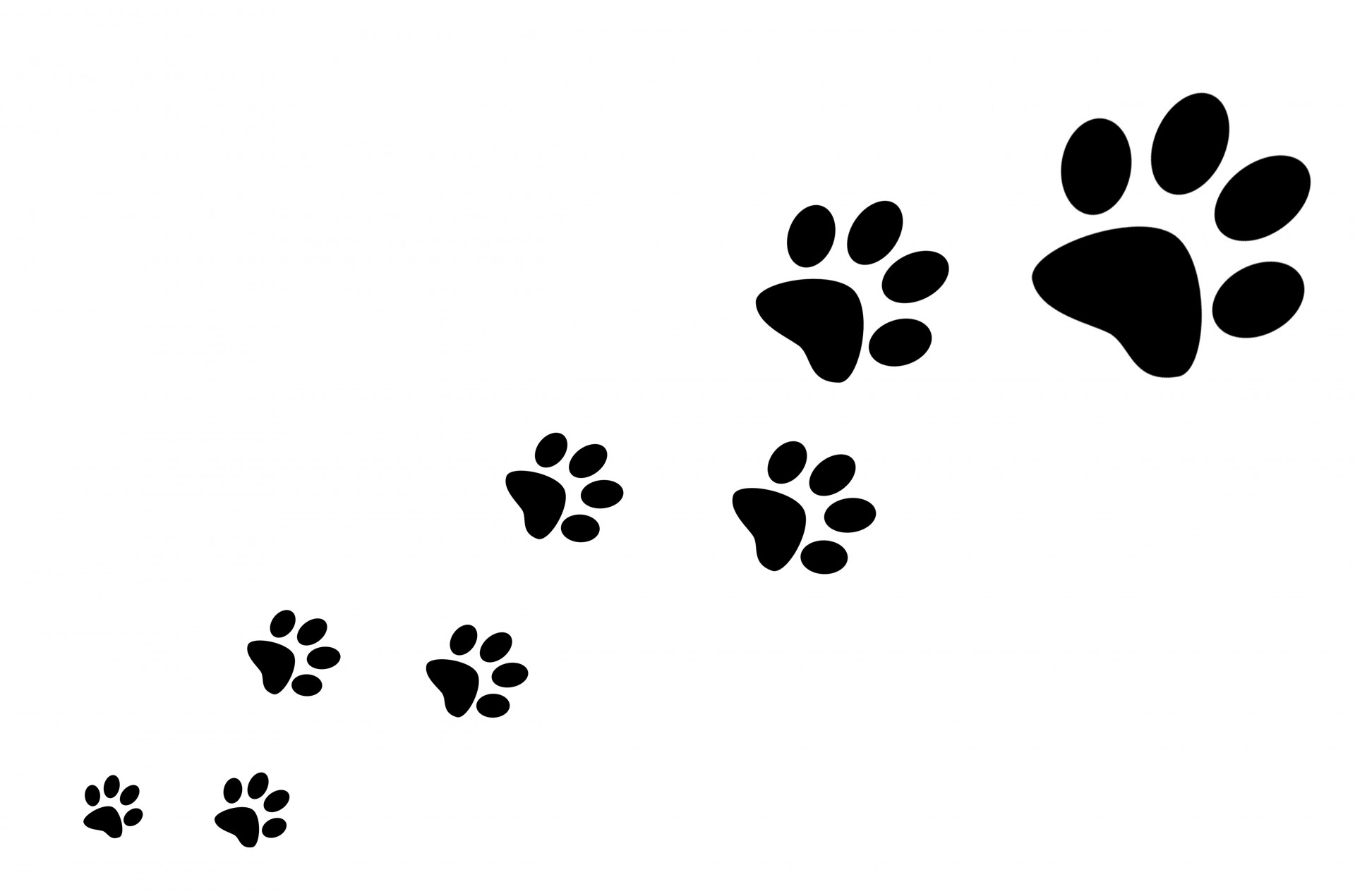 1920x1271 Solid White Paw Print No Background Clipart