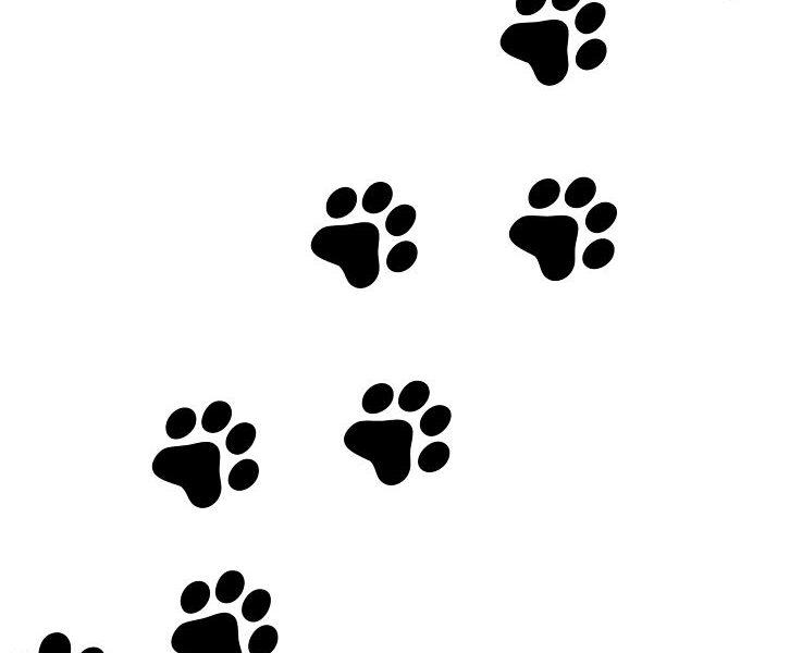 726x600 Bold Ideas Paw Prints Clip Art Best 25 Print Dog