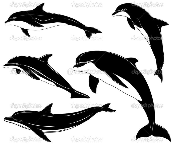 736x613 27 Best Images Dolphins, Drawing And Fish