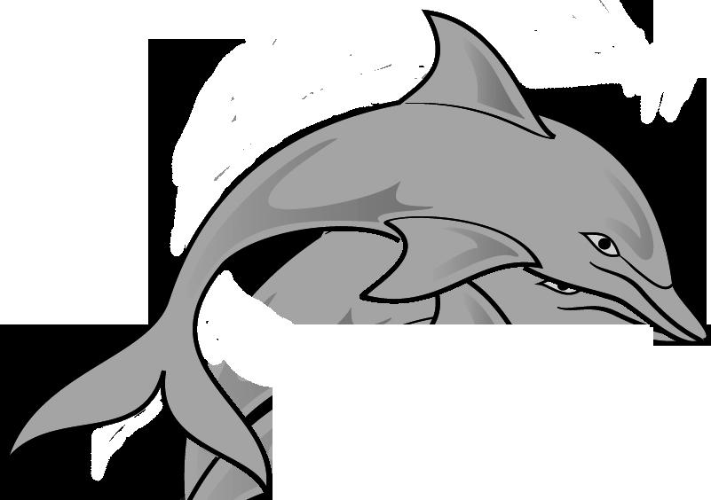 801x564 Top 77 Dolphin Clip Art