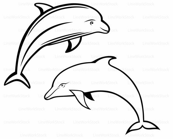 570x456 Dolphin Svg,dolphin Clipart,dolphin Svg,dolphin Silhouette,dolphin