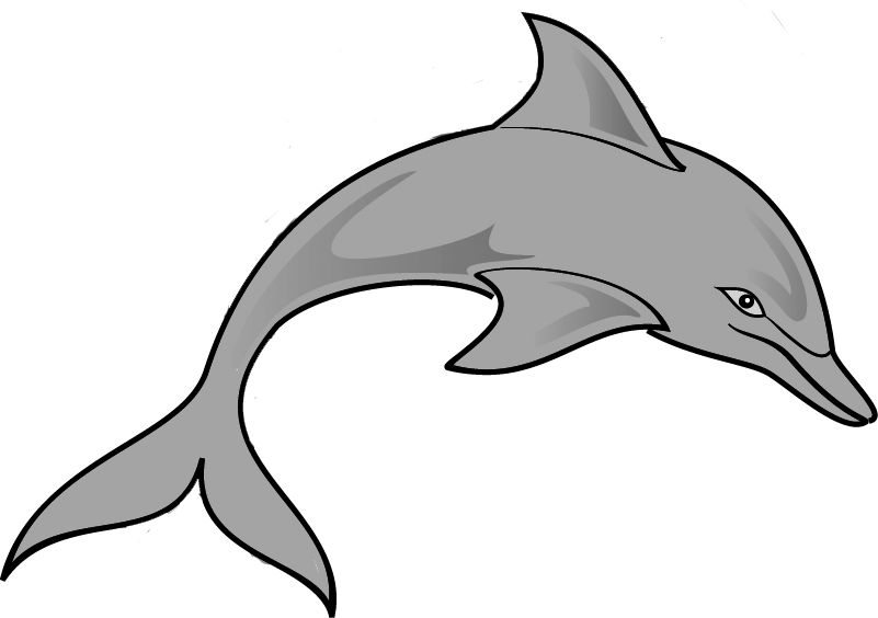 801x564 Free Dolphin Clipart Image