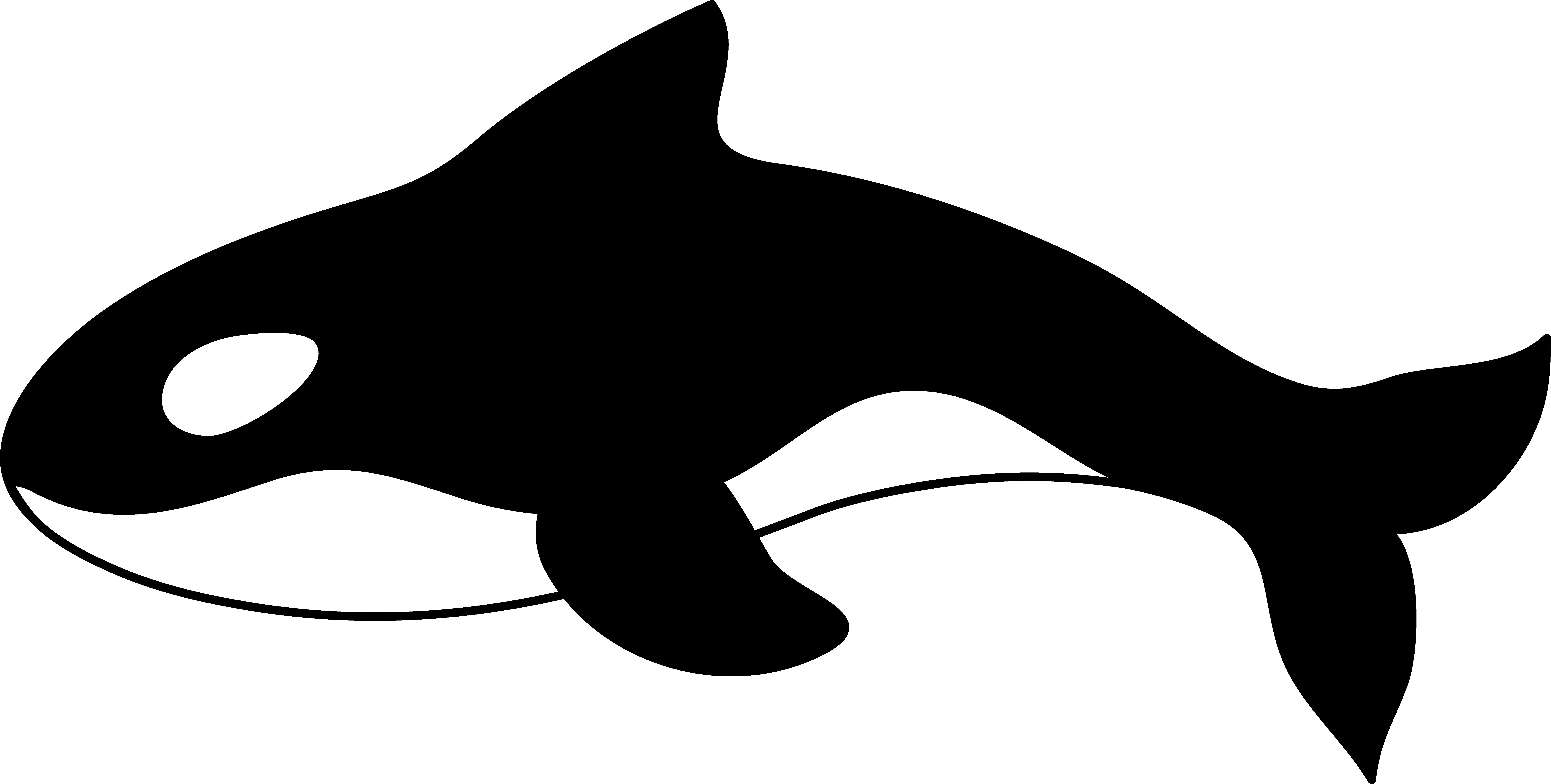 9823x4968 Orca Killer Whale