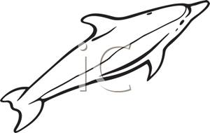 300x190 And White Dolphin Clipart Image