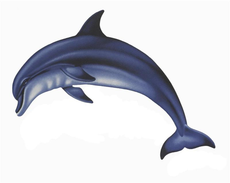 800x634 Bottlenose Dolphin Clipart Cartoon