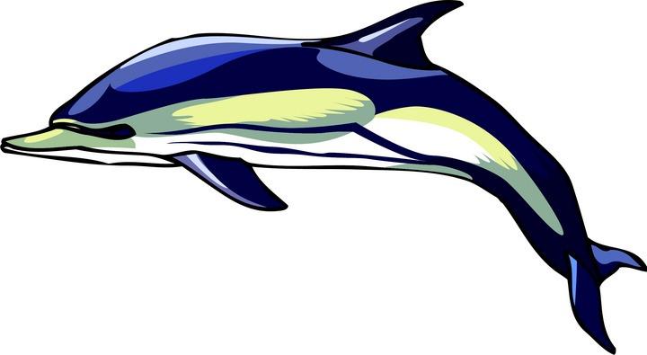 720x395 Bottlenose Dolphin Clipart Cute