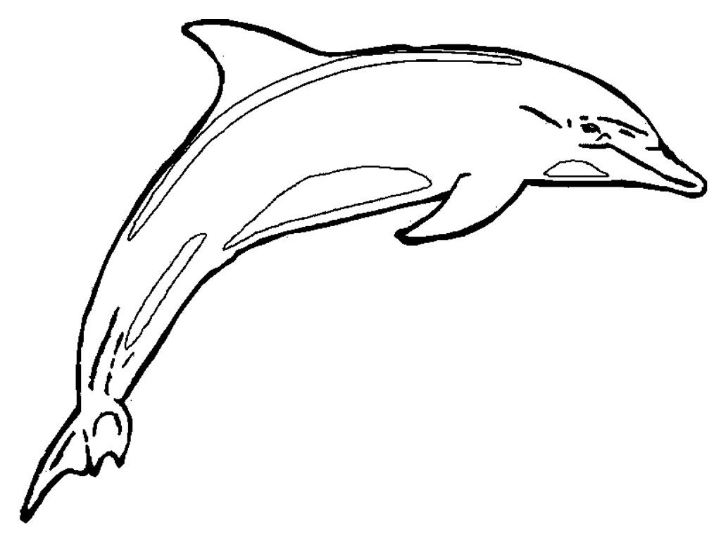 1024x768 Dolphin Clipart Line Drawing