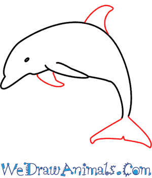 300x350 How To Draw A Dolphin
