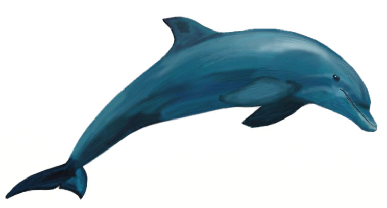 758x409 How To Draw A Dolphin