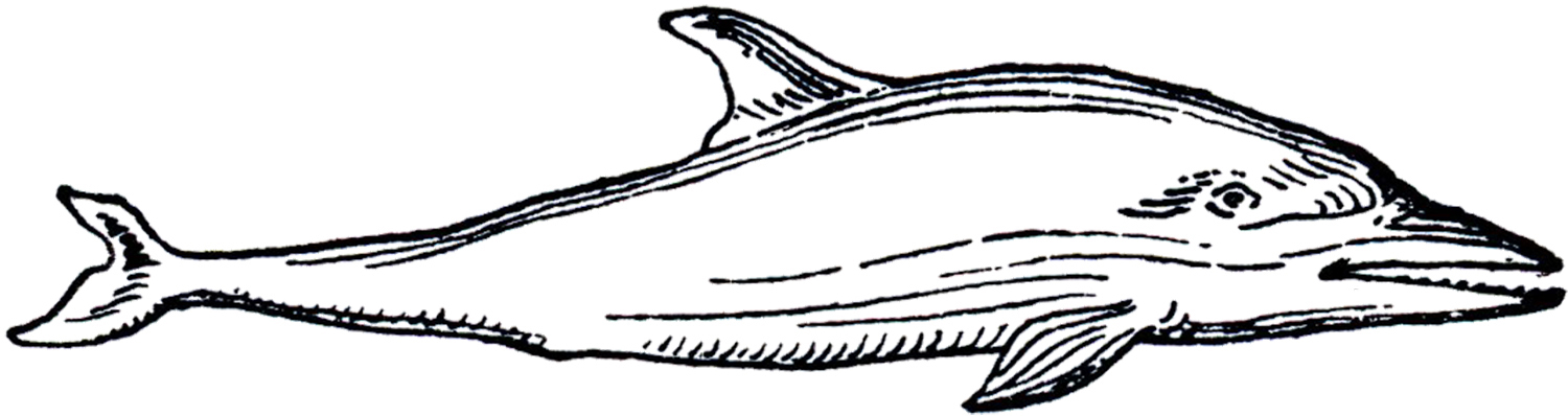 1500x398 Vintage Dolphin Images