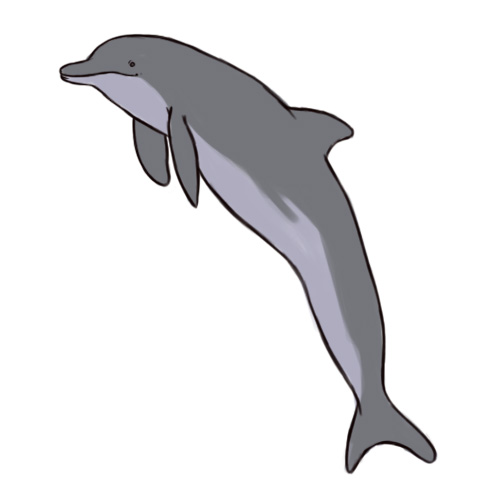 500x500 Bottlenose Dolphin Clipart Simple