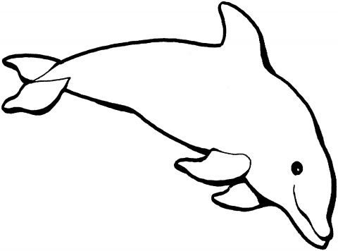 480x356 Best Dolphin Outline