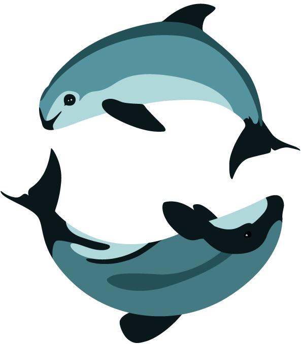 593x679 Dolphins Clipart Vaquita