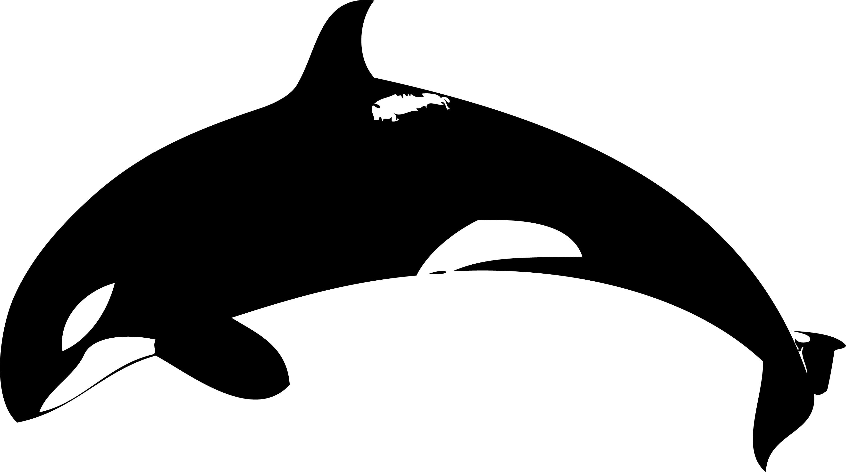 3485x1946 Orca Clip Art