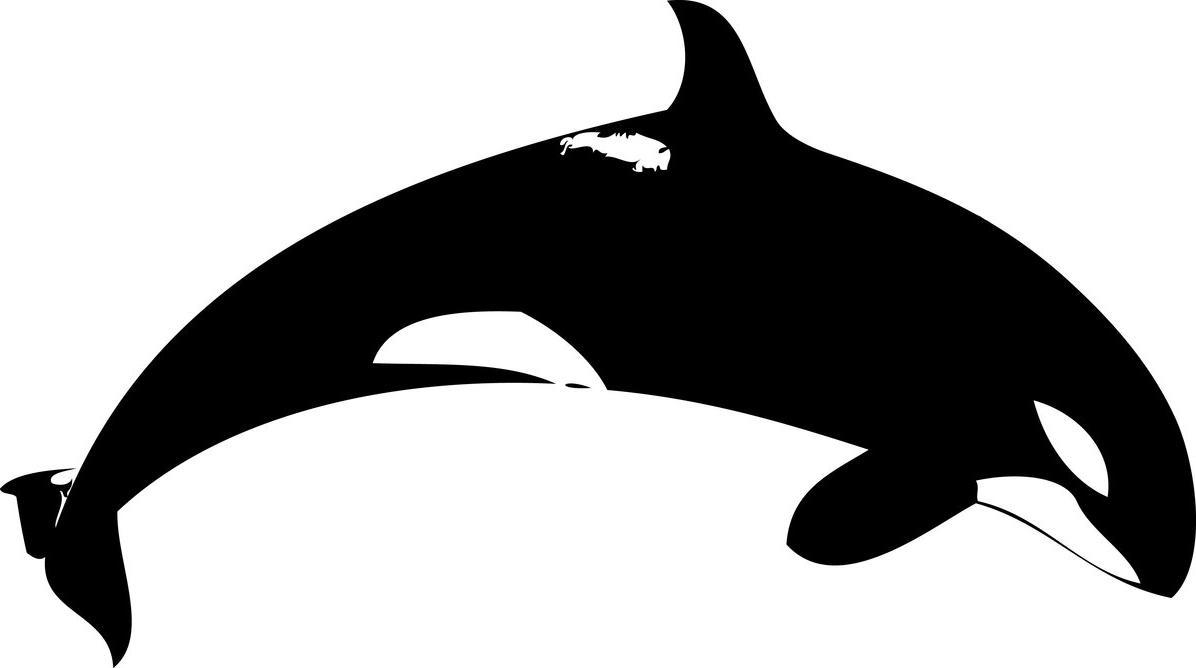 1196x668 Top 75 Orca Clip Art
