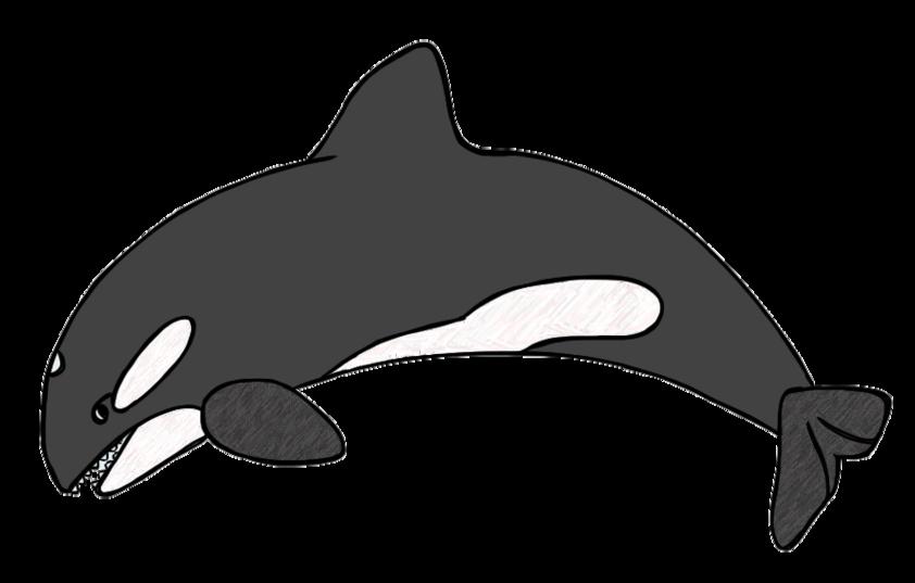 842x537 Whale Clip Art Cartoon Free Clipart Images 5