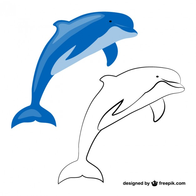 Dolphins Images Free