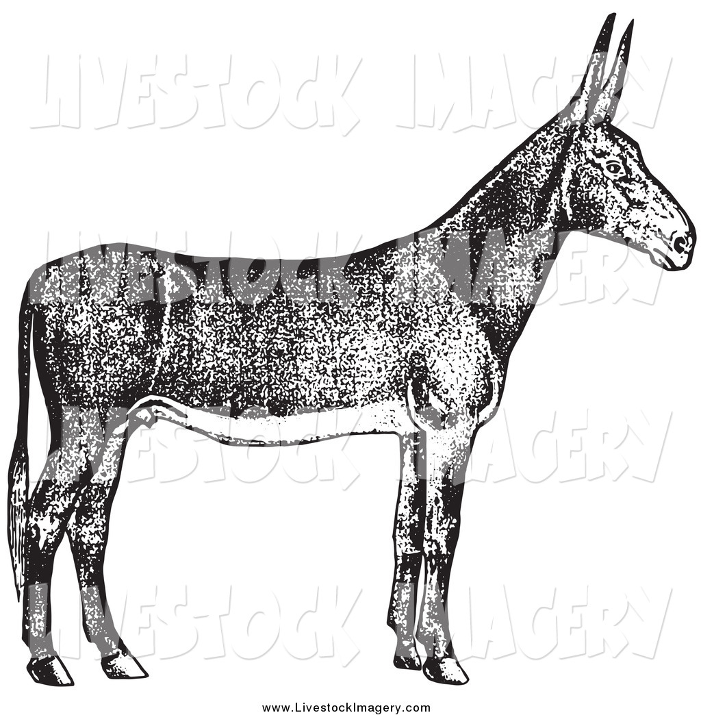 1024x1044 Royalty Free Black And White Stock Livestock Designs