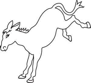 300x274 The Best White Donkey Ideas Pretty Horses