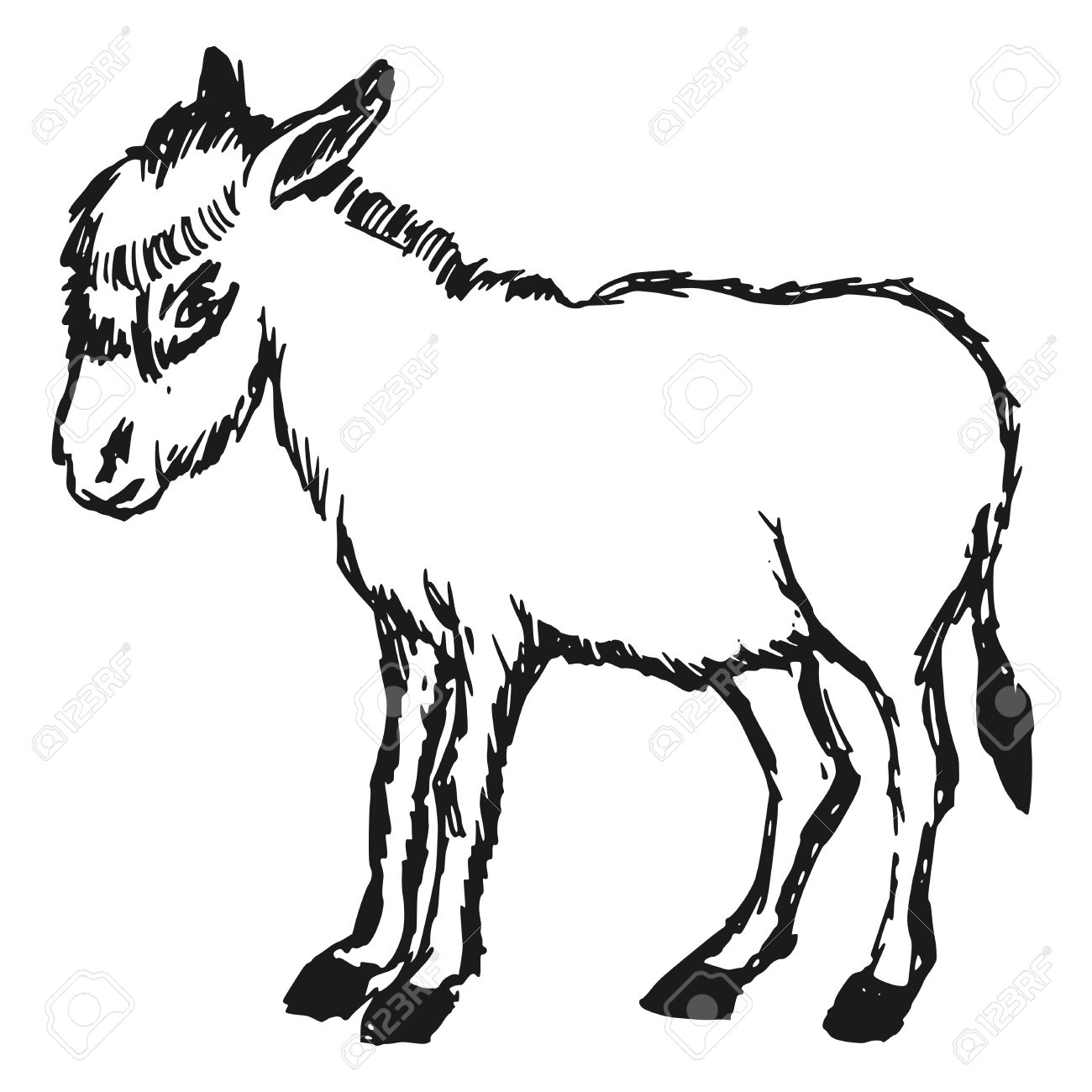 1300x1300 Drawn Donkey Cartoon