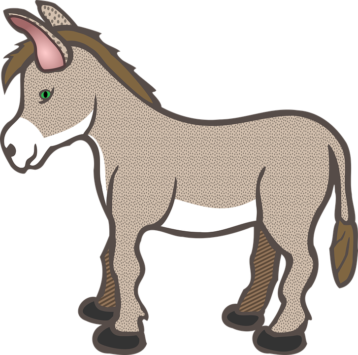 727x720 Free Photo Donkey Animals Farm Cute