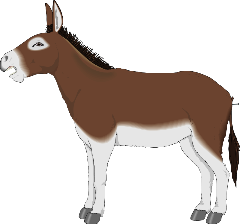800x748 Donkey 2 Free Vector 4vector
