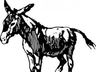 310x233 Donkey Head Clip Art Free Vectors Ui Download