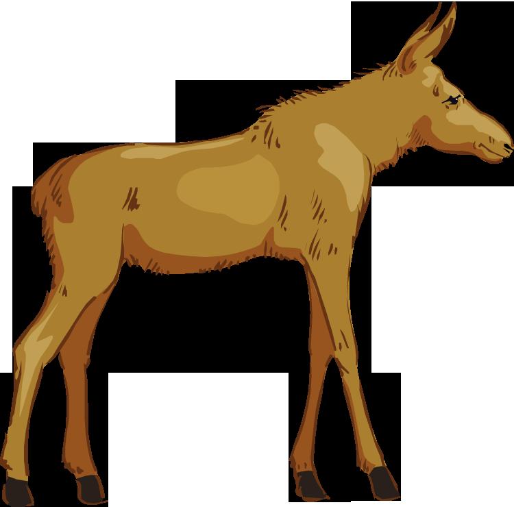 750x740 Top 79 Moose Clip Art