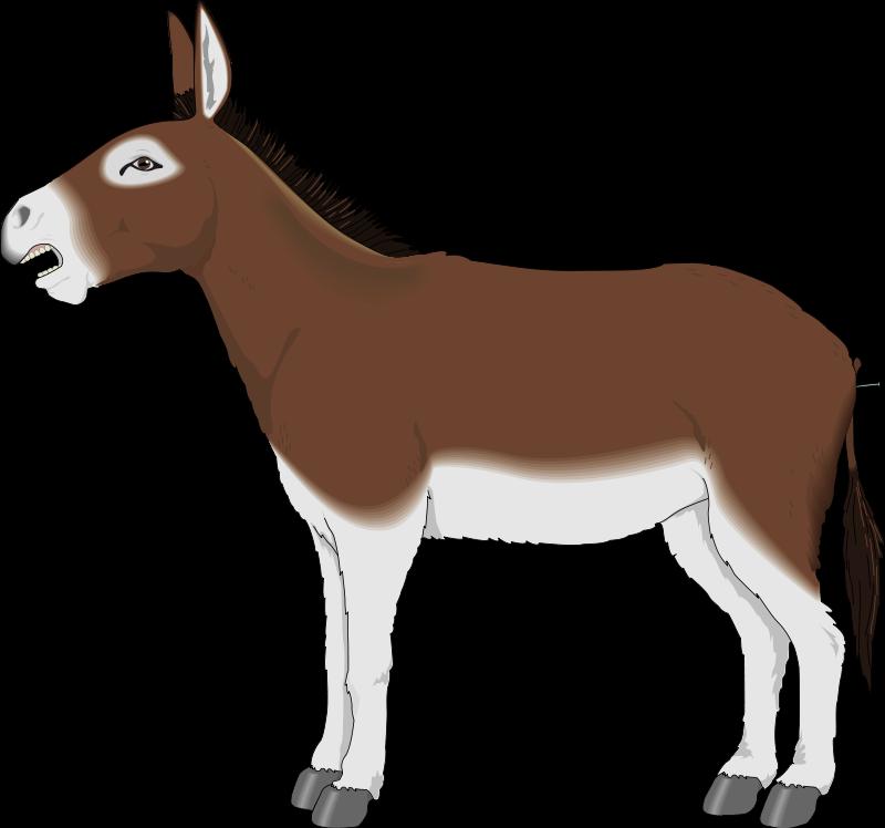 800x748 Donkey Clipart